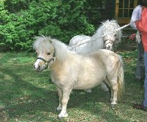 Rarilee Conway's Personal Ponies