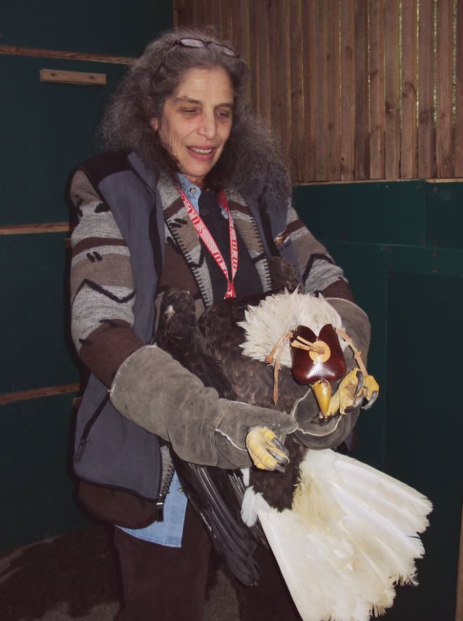 Wendy working with bald eagle