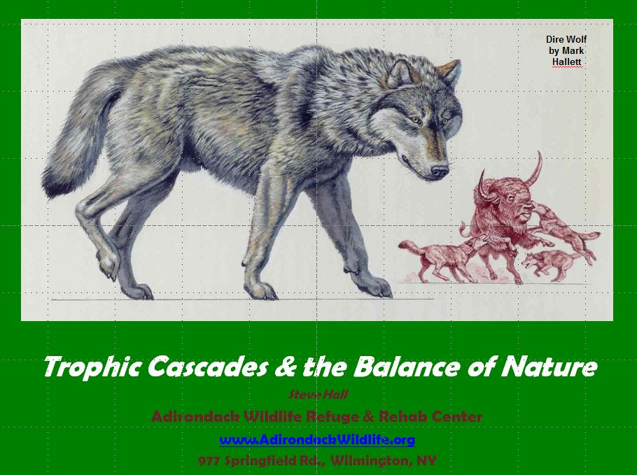 Trophic Cascades & the Balance of Nature