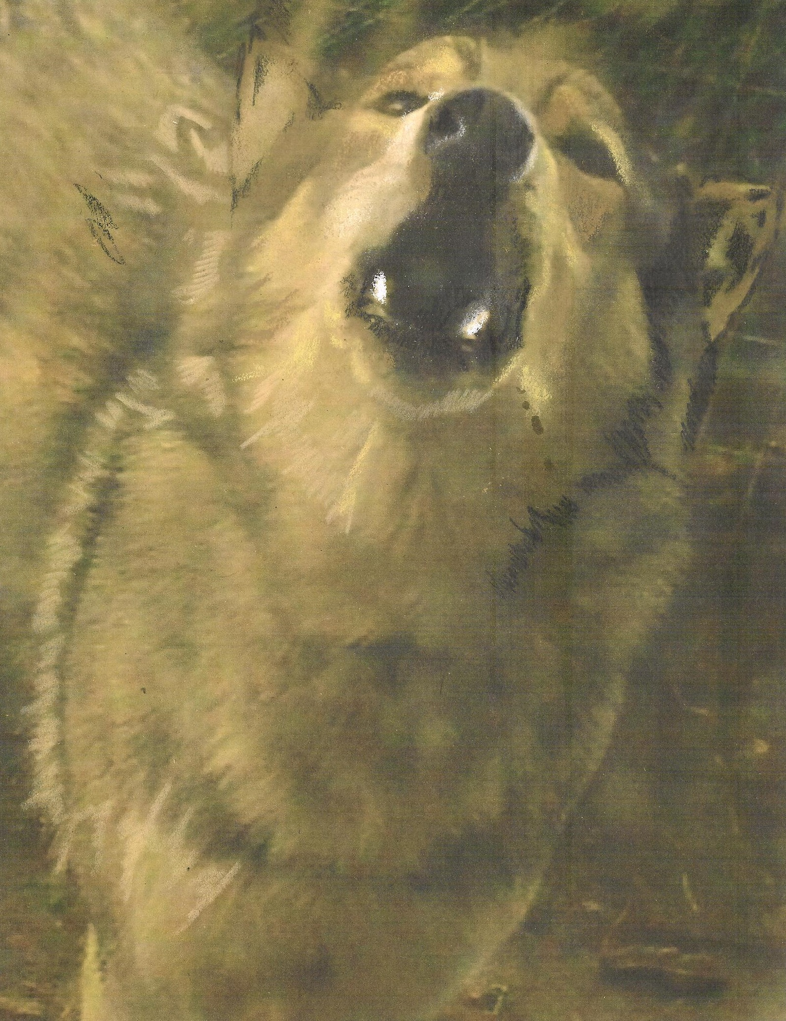 Cree Howling, pastel by Wendy Hall
