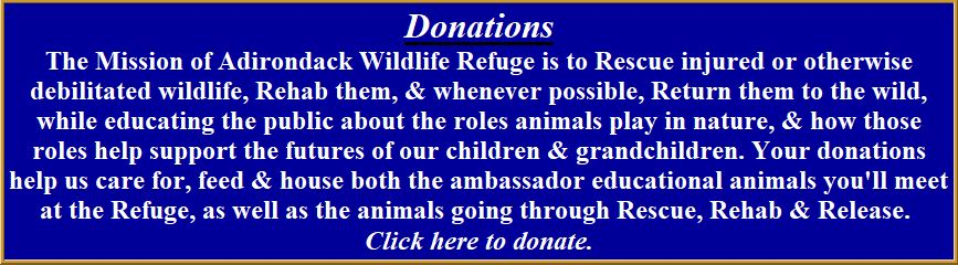 Donate to Adirondack Wildlife Refuge