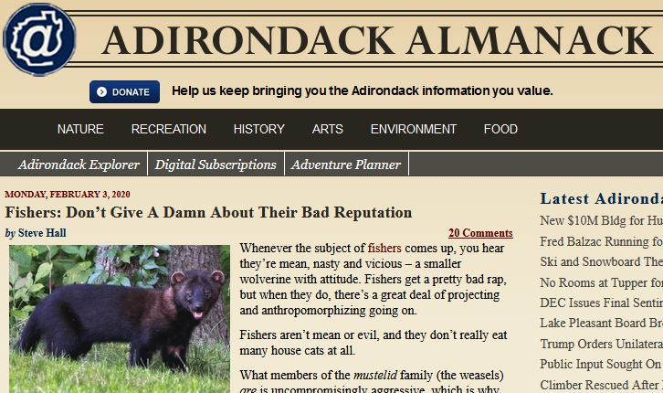 Fishers by Steve Hall - Adirondack Almanack