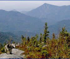 Cree on Jay Mtn, Whiteface in background