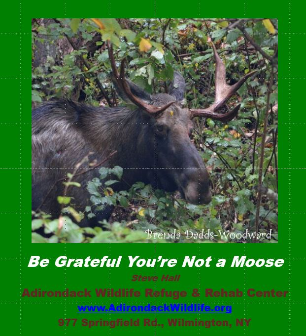 Moose PowerPoint