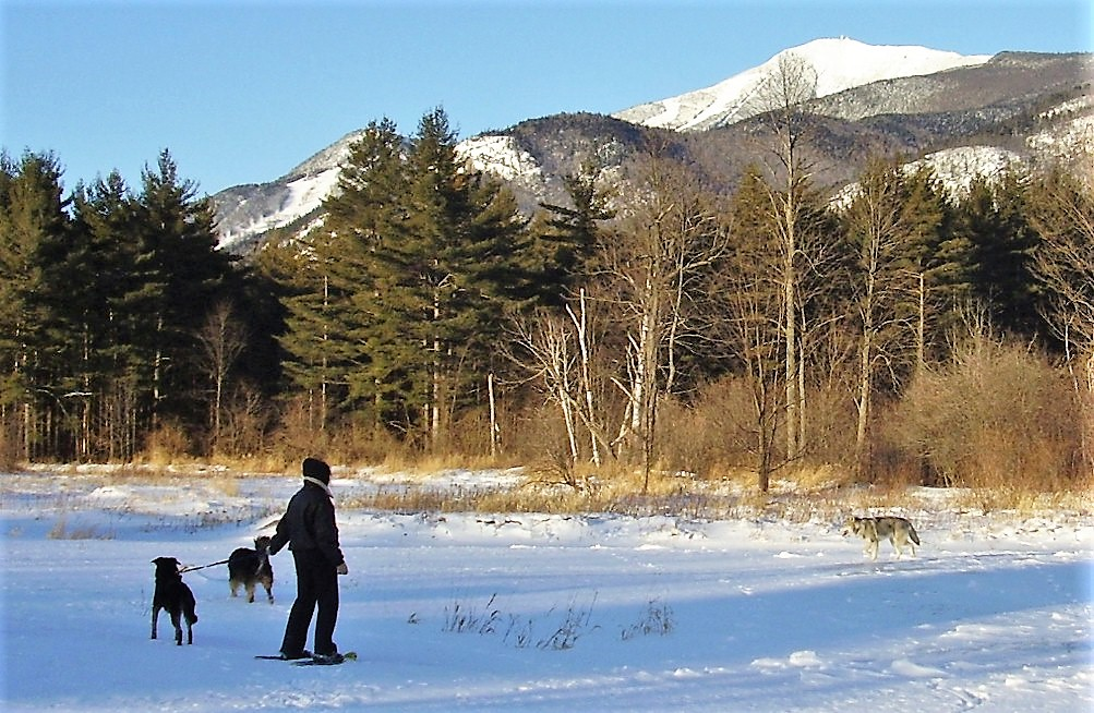 Wendy with dogs on frozen Ausable