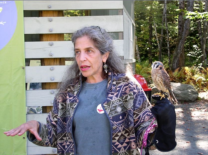 Wendy with kestrel