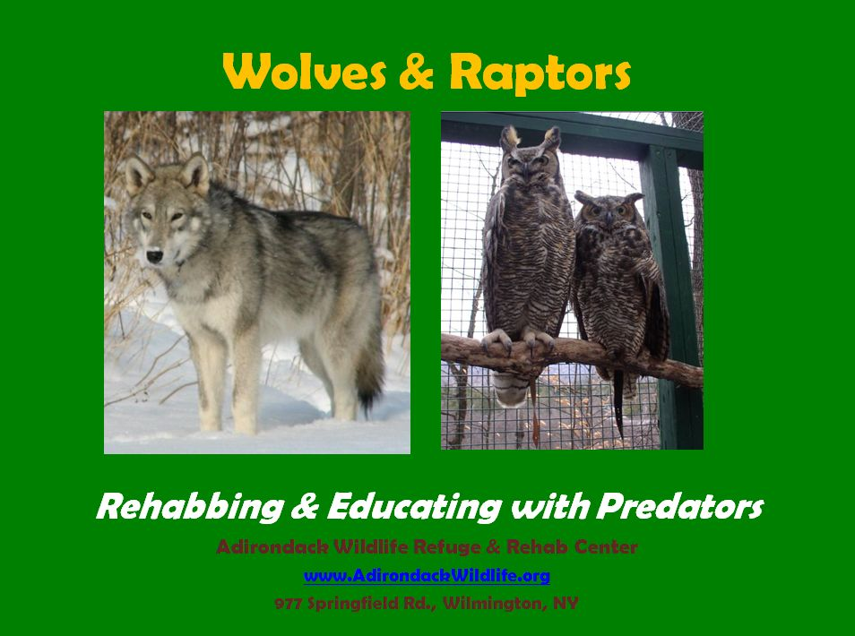 Wolves and Raptors Rehab & Education