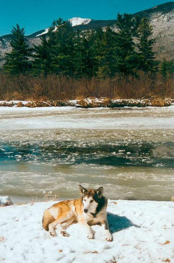 Chino on River Bank, Whiteface Mountain in Background
